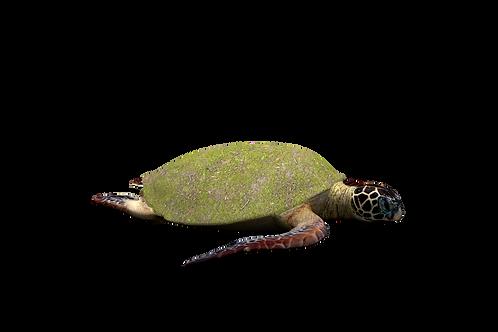 Speelheuvel landart schildpad