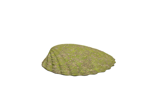 Speelheuvel landart schelp