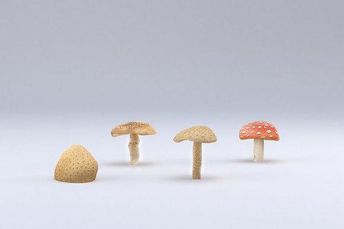 Sculpturen paddenstoelengroep