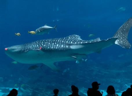 Experience The Georgia Aquarium