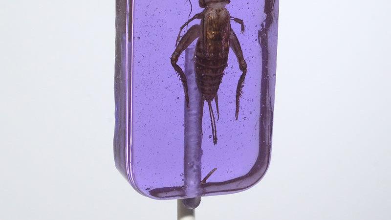 Cricket Lickit Grape Flavored Sucker