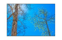 AppalachianForest60