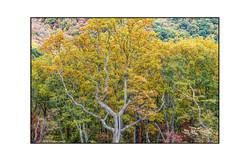 AppalachianForest5