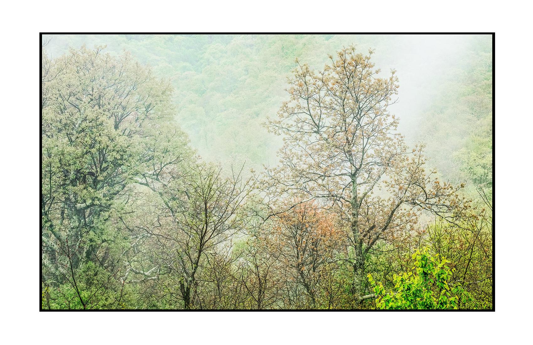 AppalachianForest31