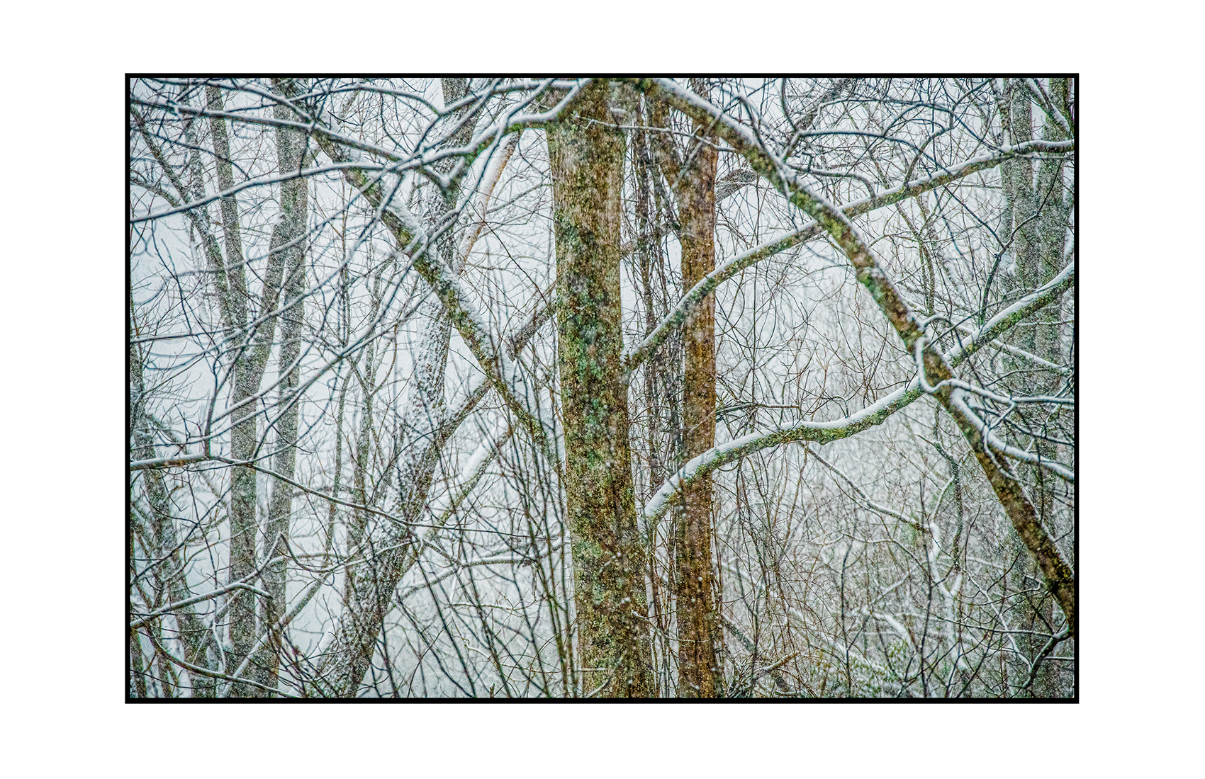 AppalachianForest20
