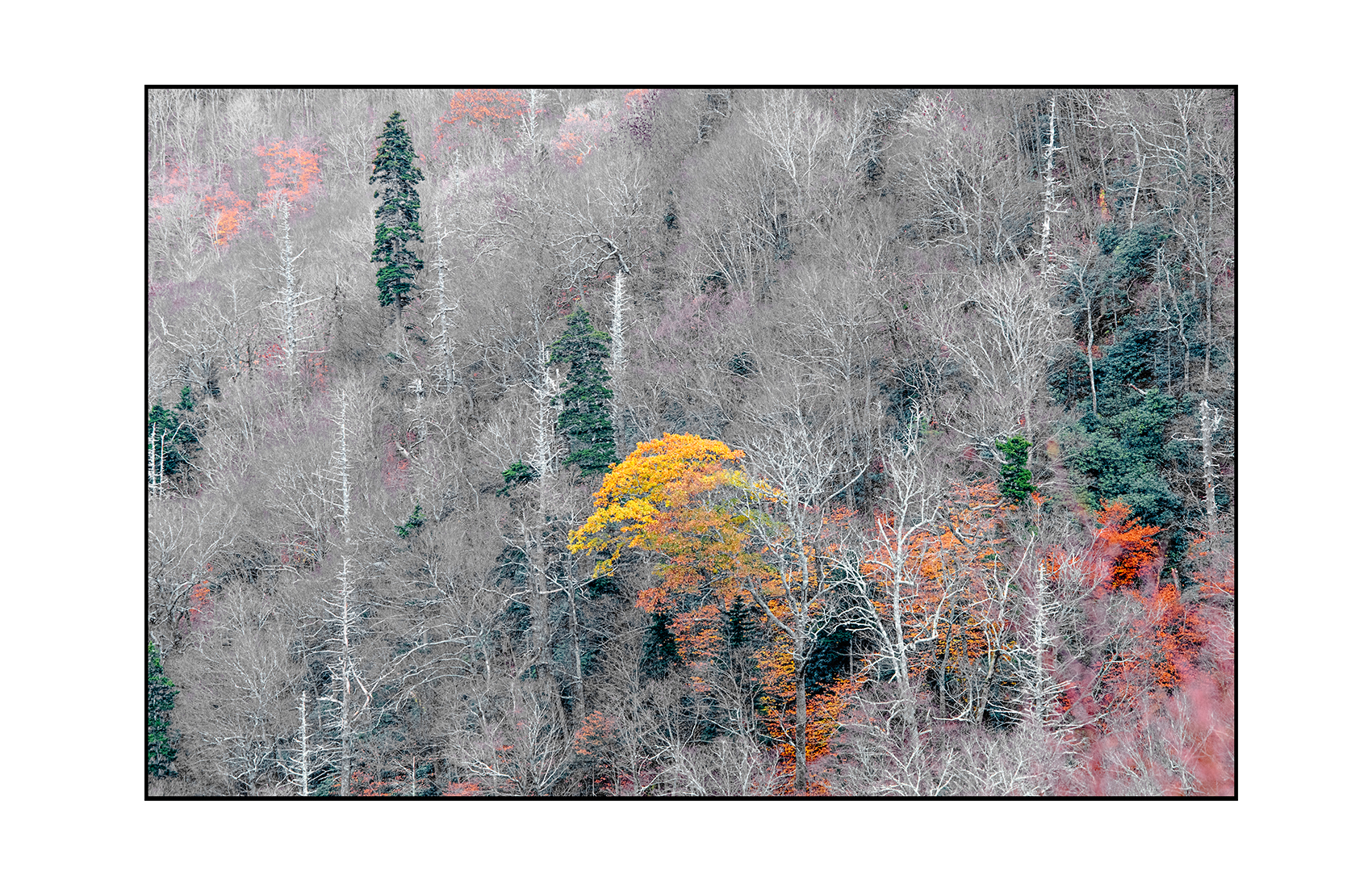 AppalachianForest23