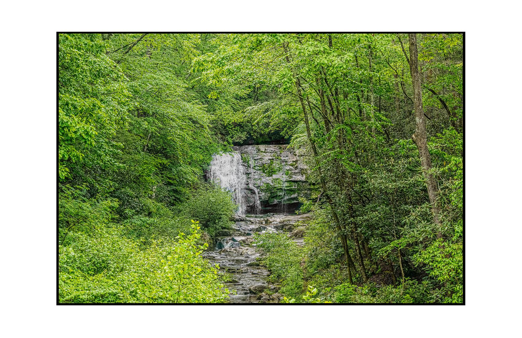 AppalachianForest36