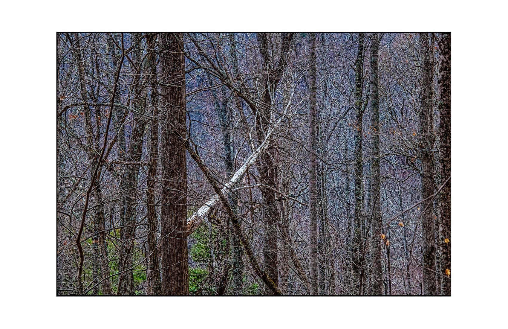 AppalachianForest17