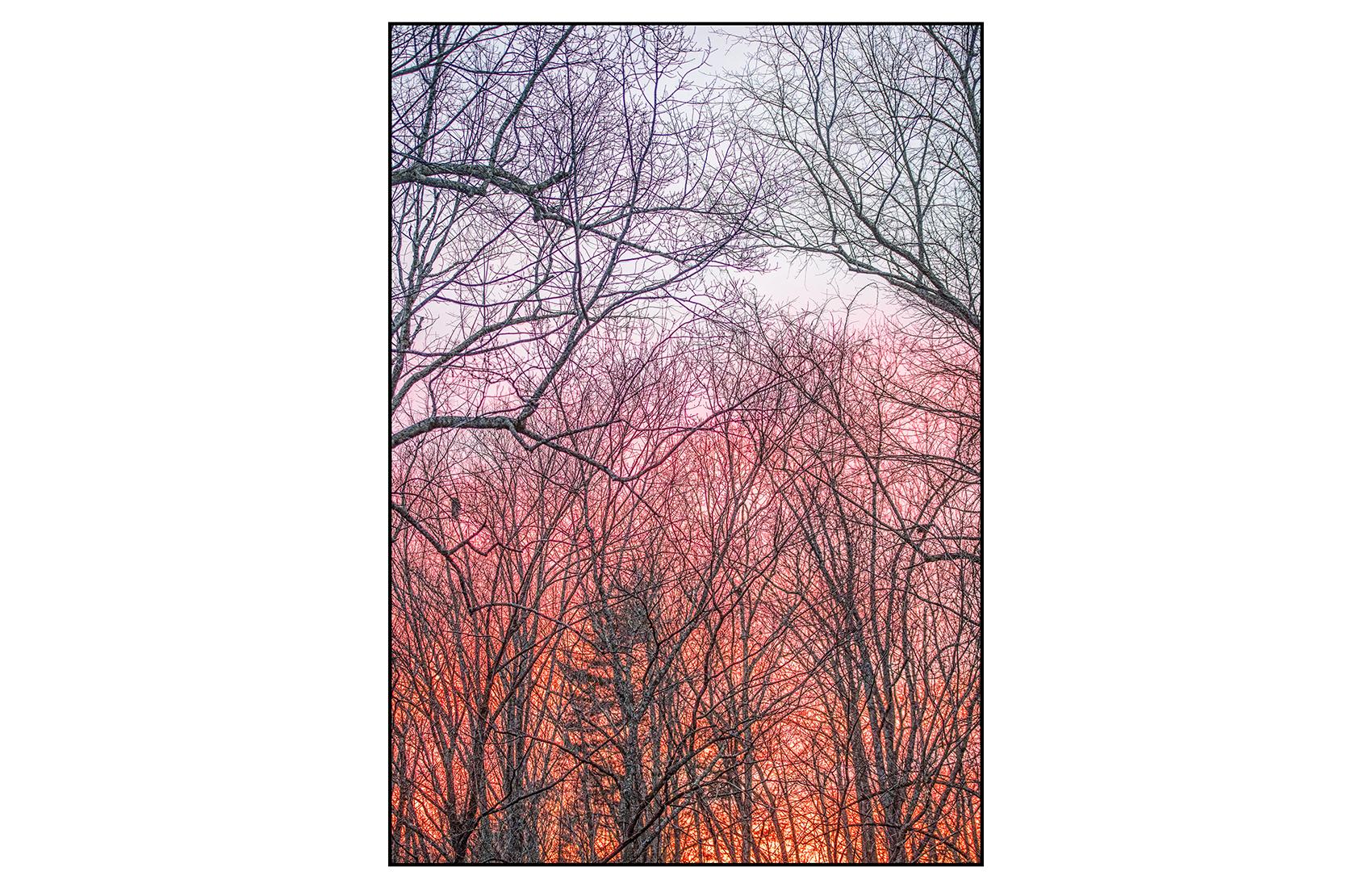 AppalachianForest21