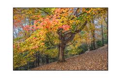 AppalachianForest13