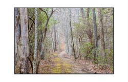 AppalachianForest1