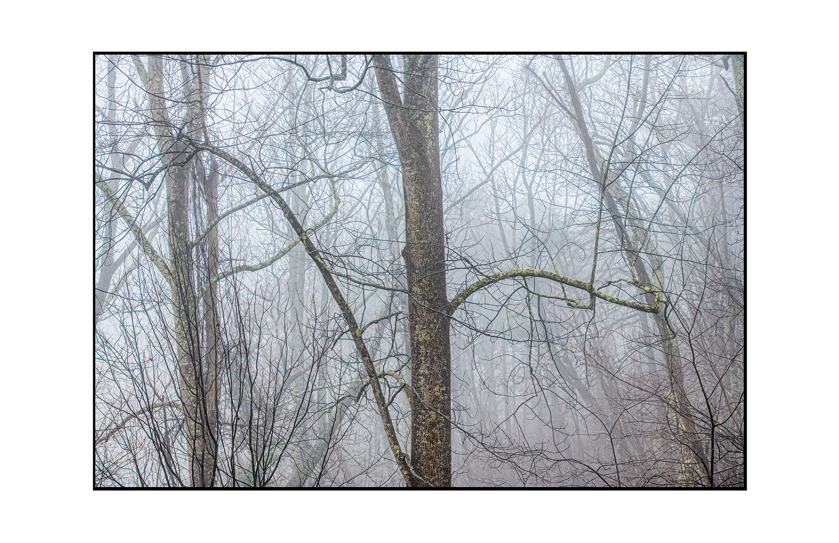 AppalachianForest19