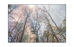AppalachianForest47