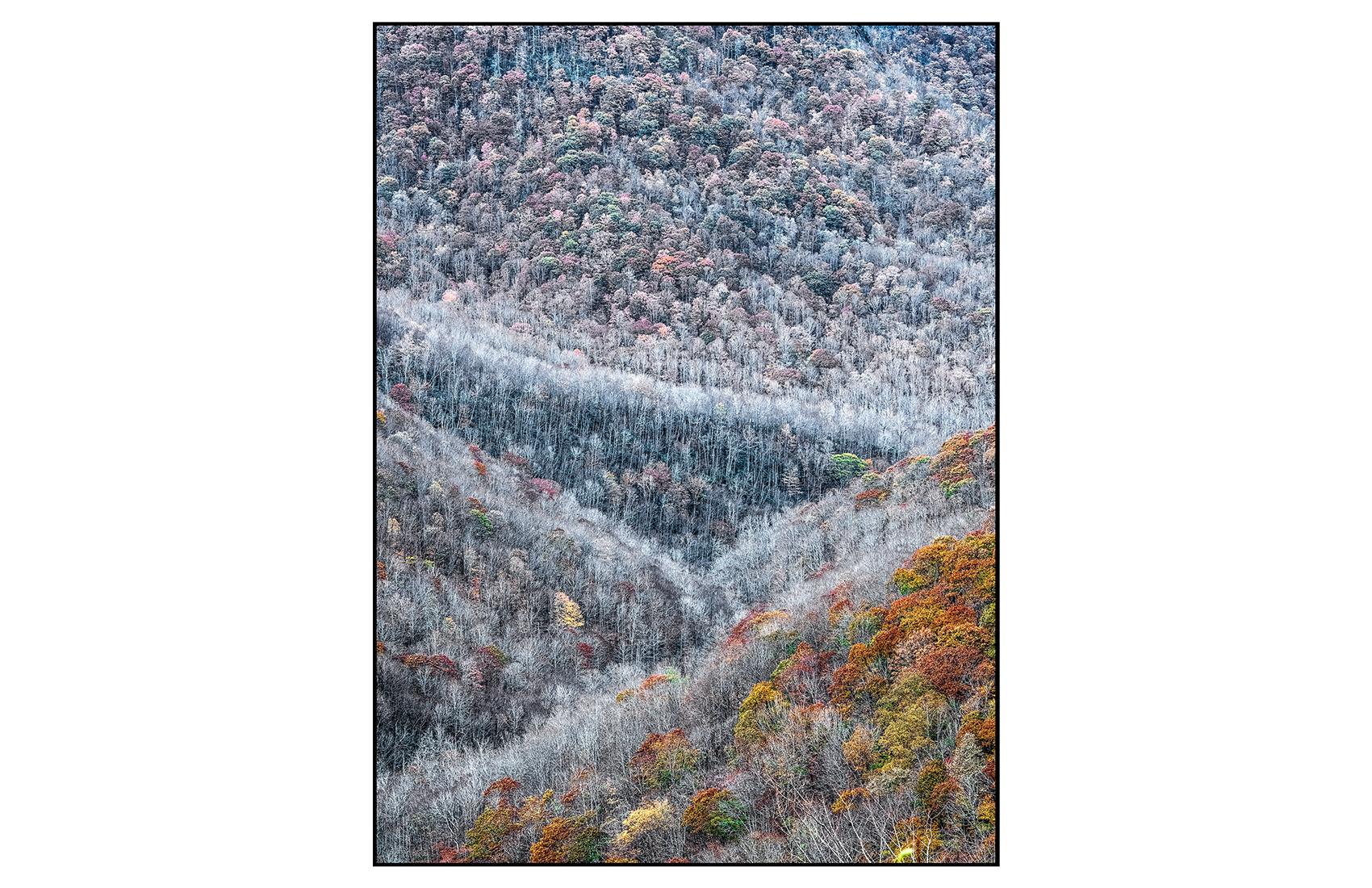 AppalachianForest24