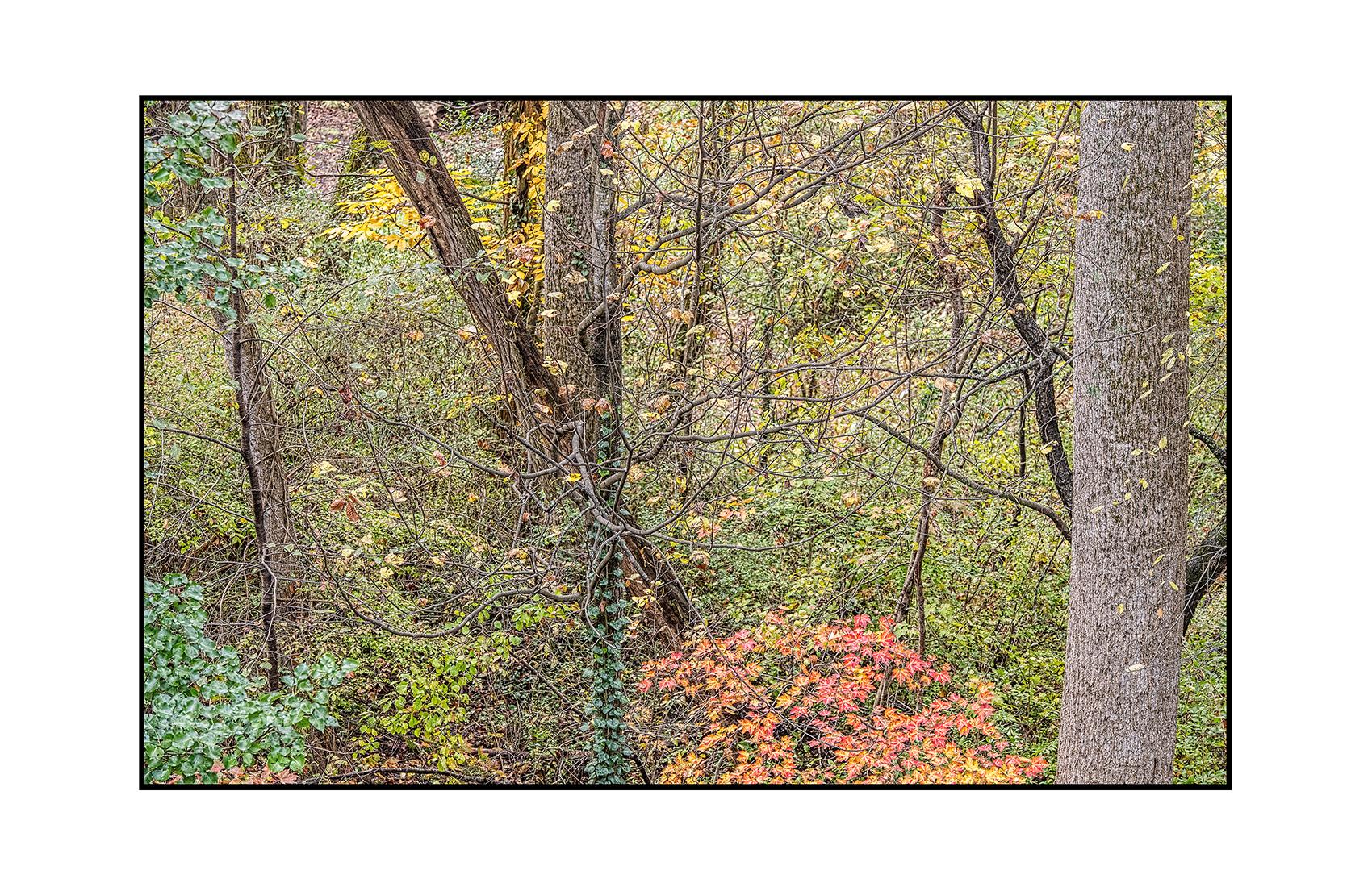 AppalachianForest4