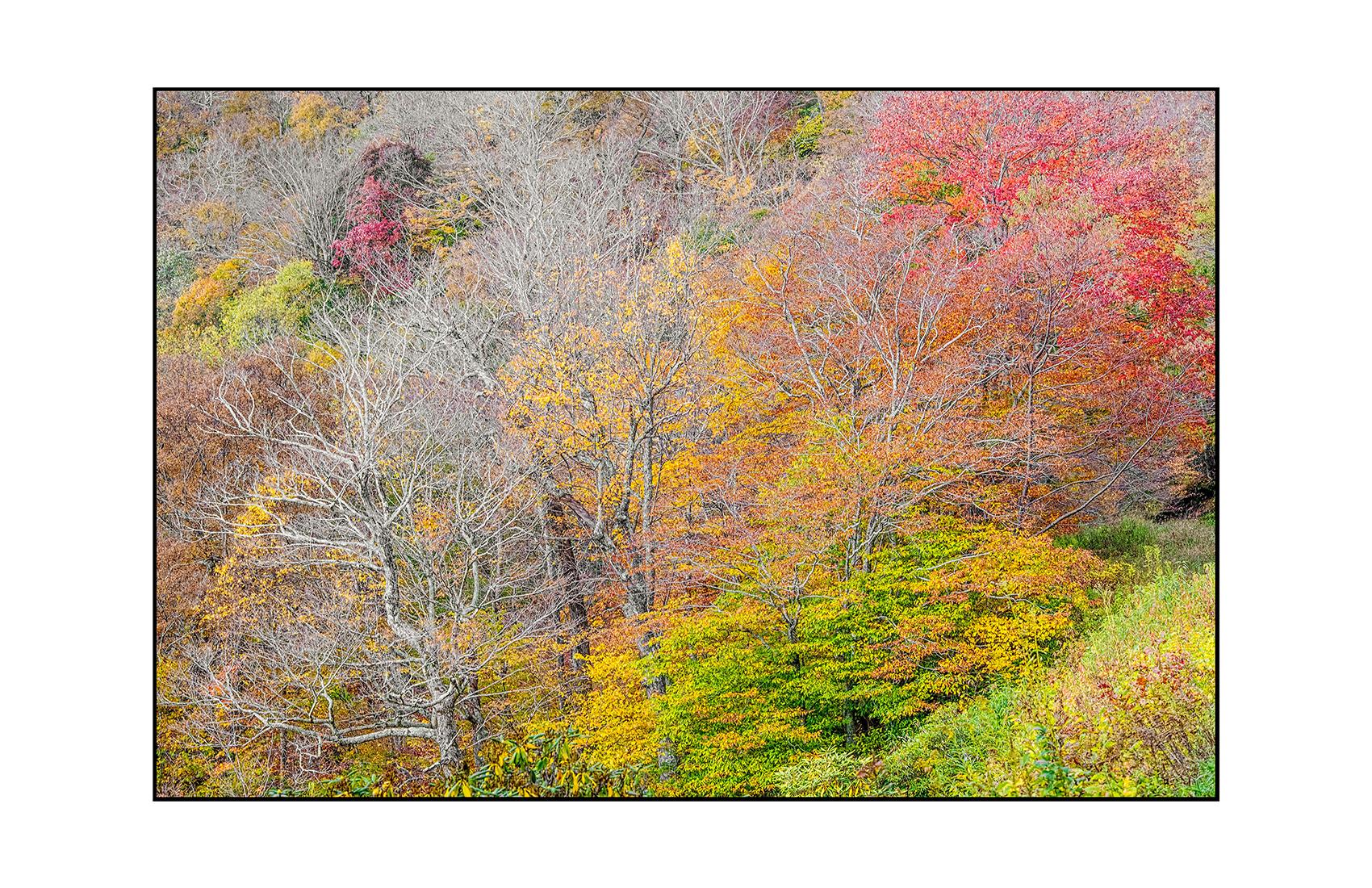 AppalachianForest8