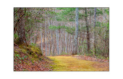 AppalachianForest50