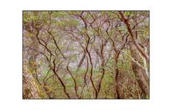 AppalachianForest18