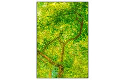 AppalachianForest64
