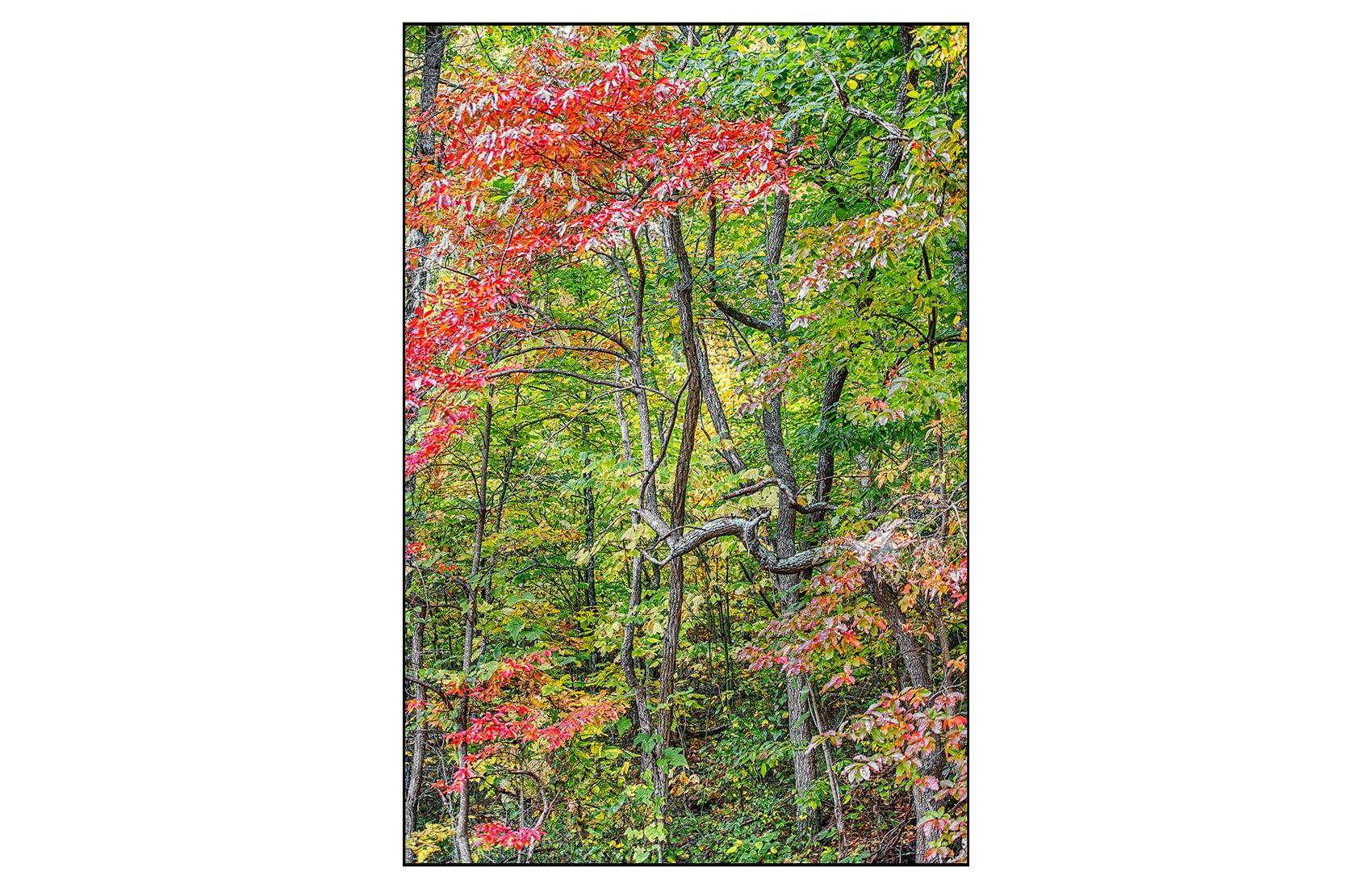 AppalachianForest16