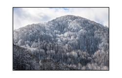 AppalachianForest26