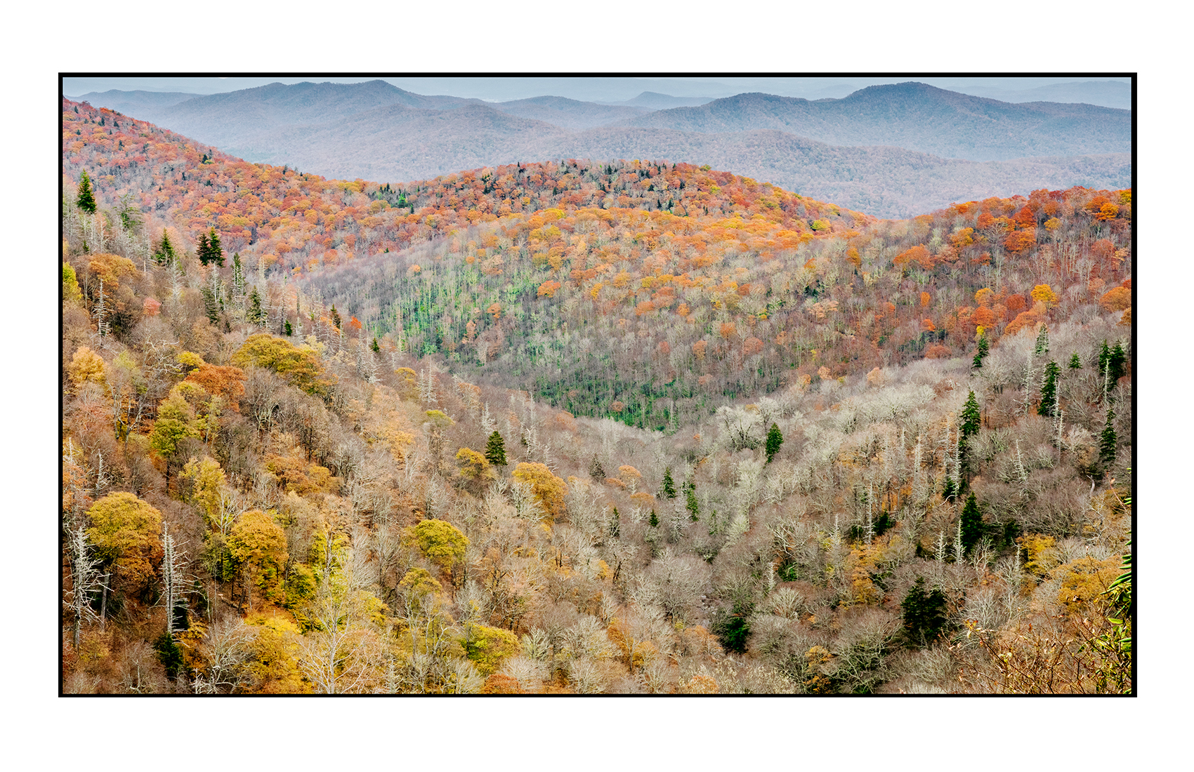 AppalachianForest22