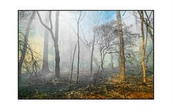 AppalachianForest42