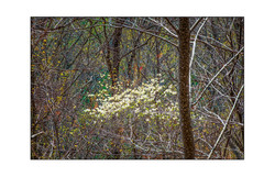 AppalachianForest51