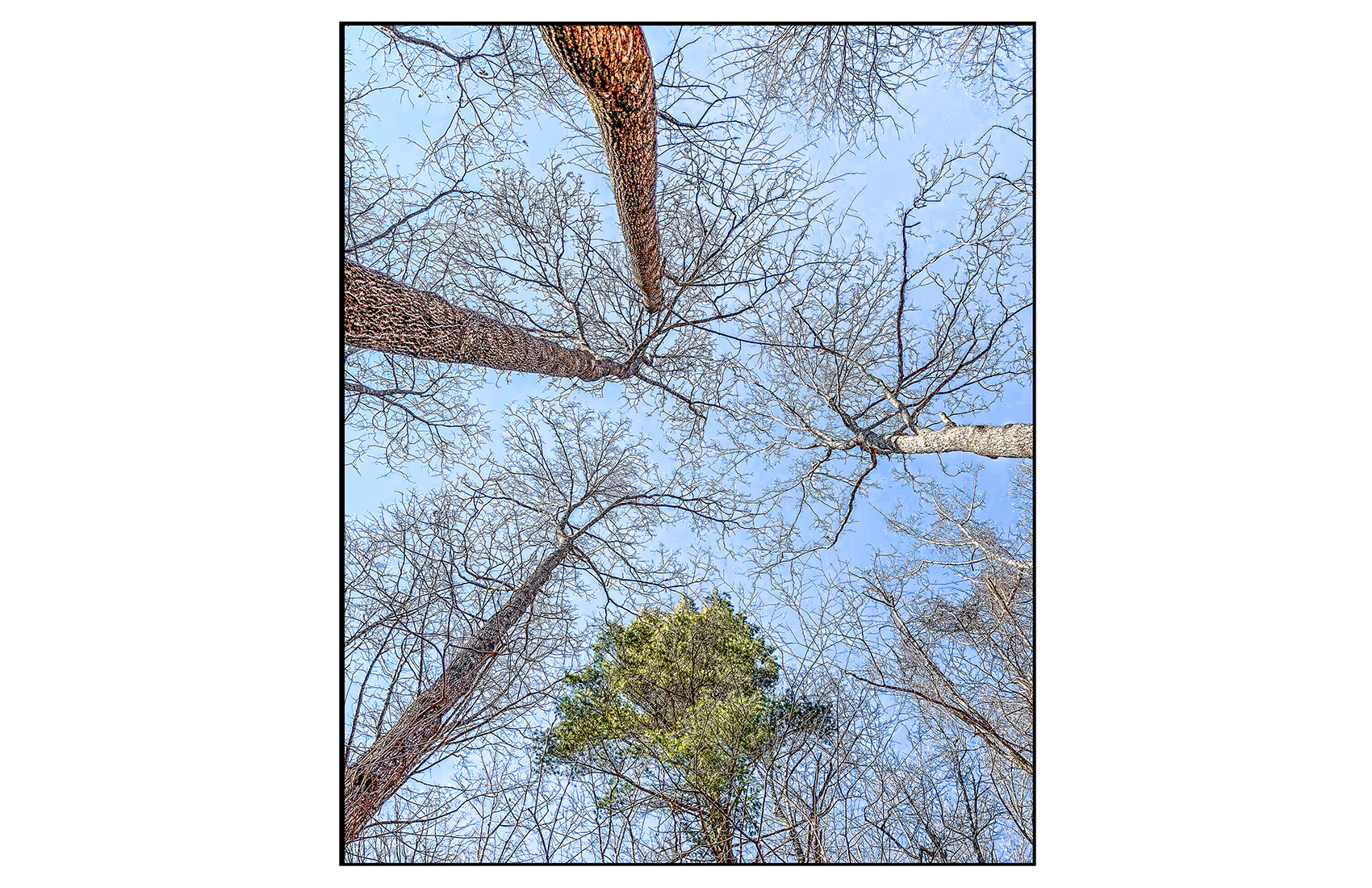AppalachianForest39