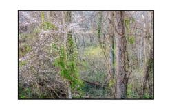 AppalachianForest40