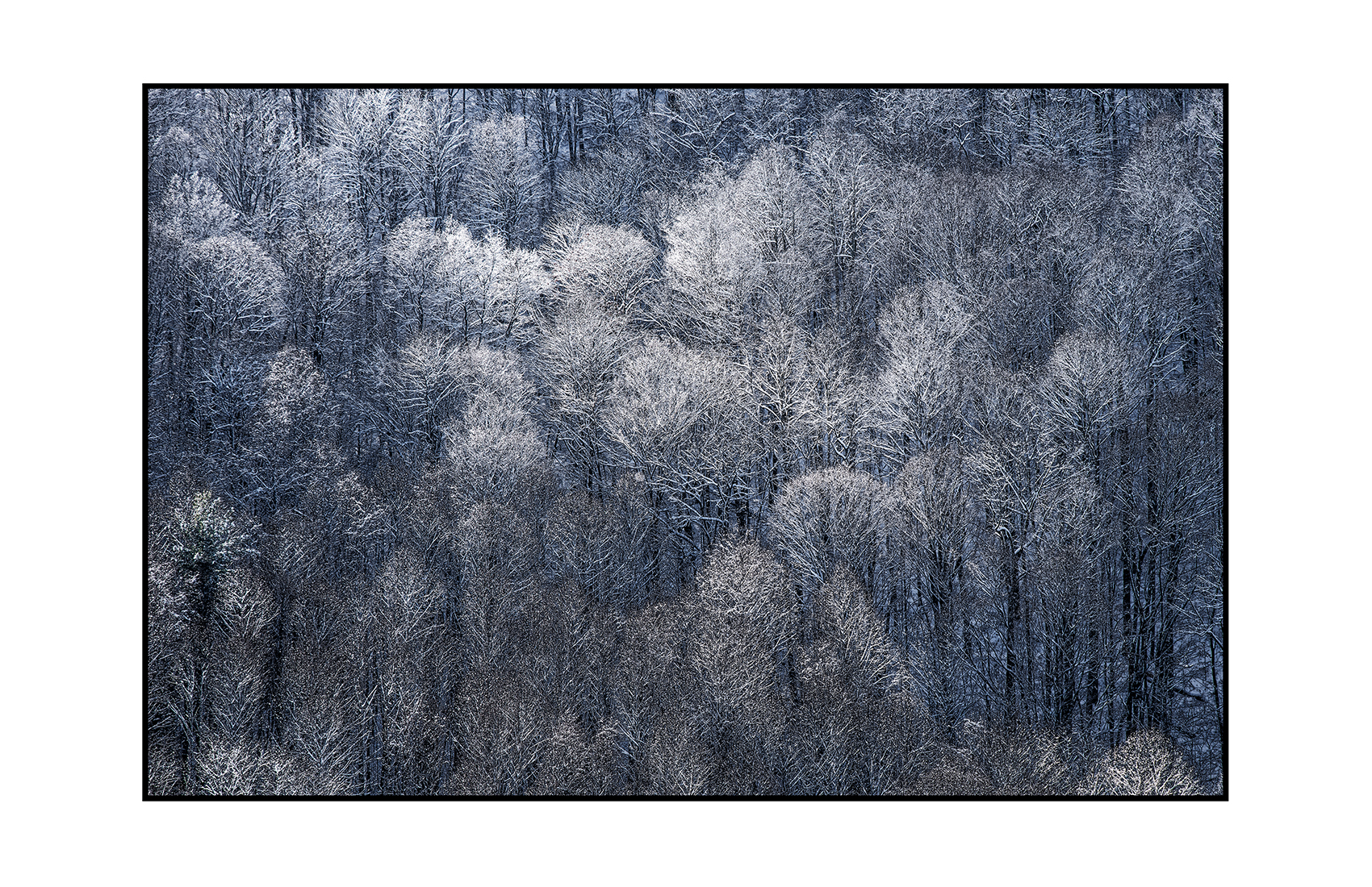 AppalachianForest28