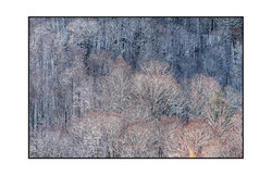 AppalachianForest27