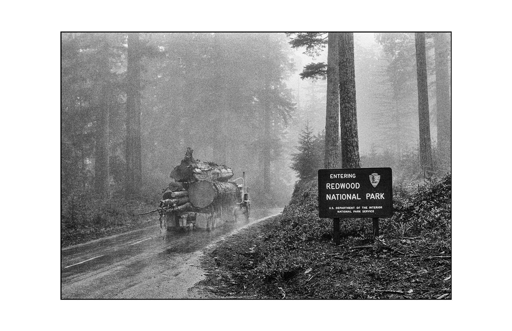 Redwoods. Northern California
