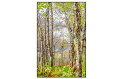 AppalachianForest34