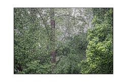 AppalachianForest33