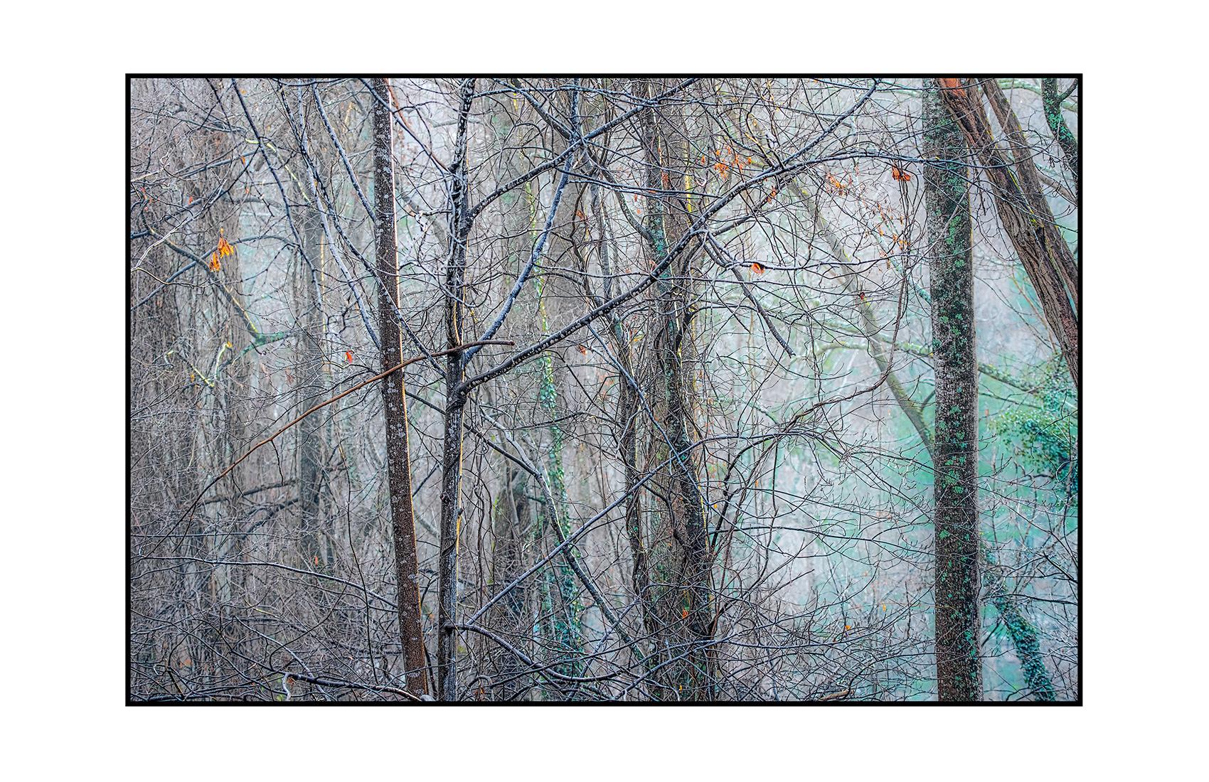 AppalachianForest25