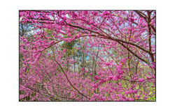 AppalachianForest11