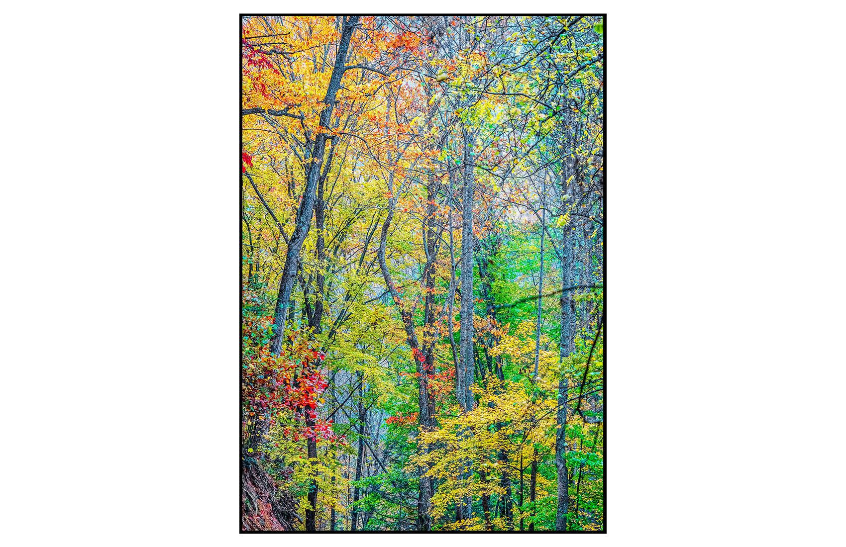 AppalachianForest30