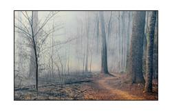 AppalachianForest43