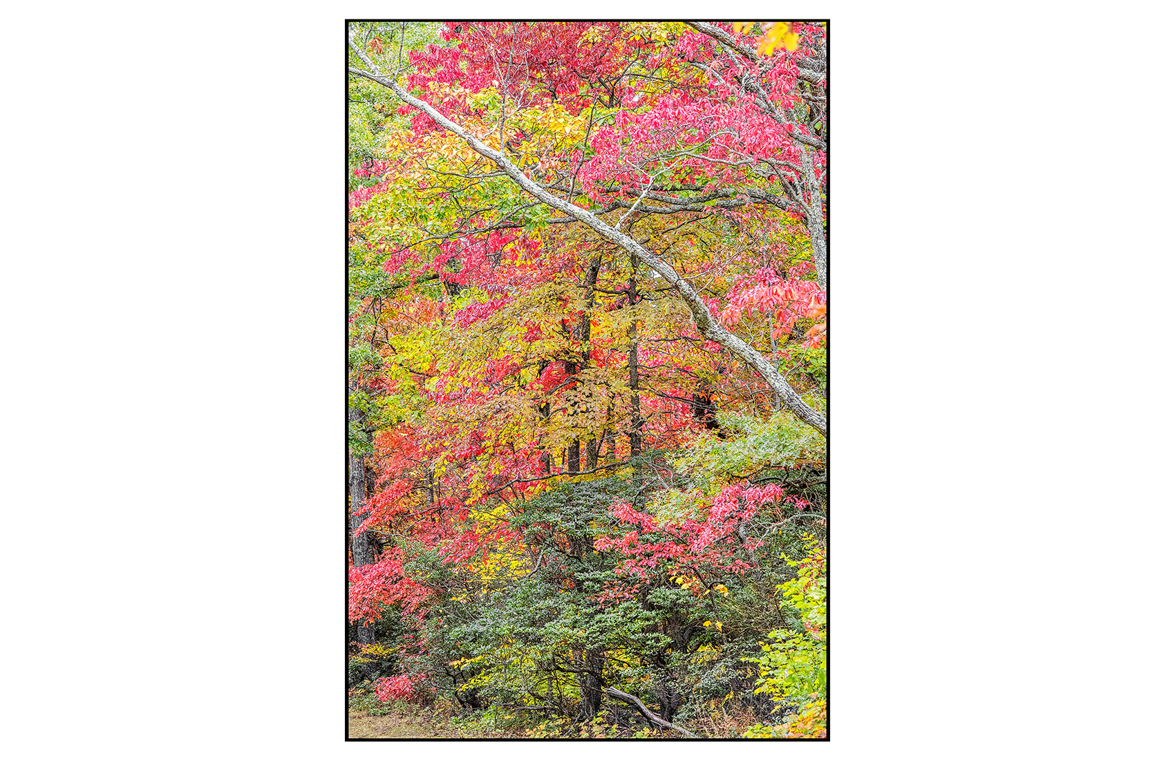 AppalachianForest15