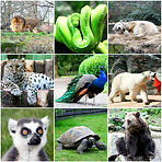 bigstock-Beautiful-Animals-Collage-With-