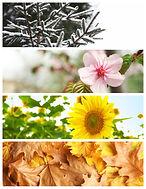 bigstock-Beautiful-Photos-Of-Nature-Fo-2