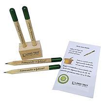 Kit Lápis semente sem embalagem.jpg