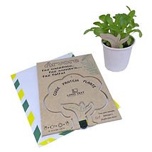 convite semente plantavel.jpg