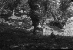 Colle del Carnaio (1927)