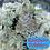Thumbnail: A.B SEEDS -  RAINBOW PEBBLEZ  / FREEBEIS