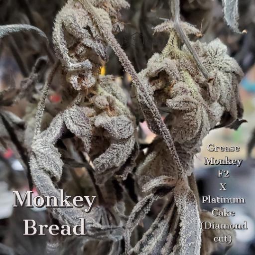A.B SEEDS - MONKEY BREAD / FREEBEIS