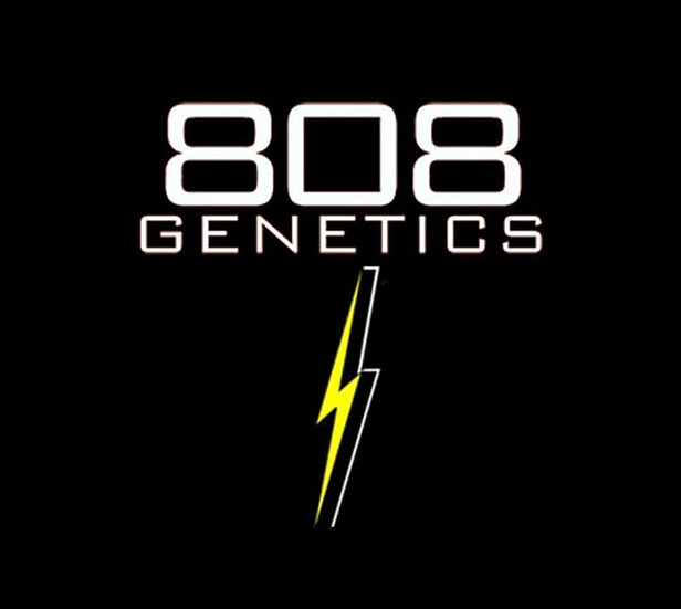 808 GENETICS -  Fire Shit