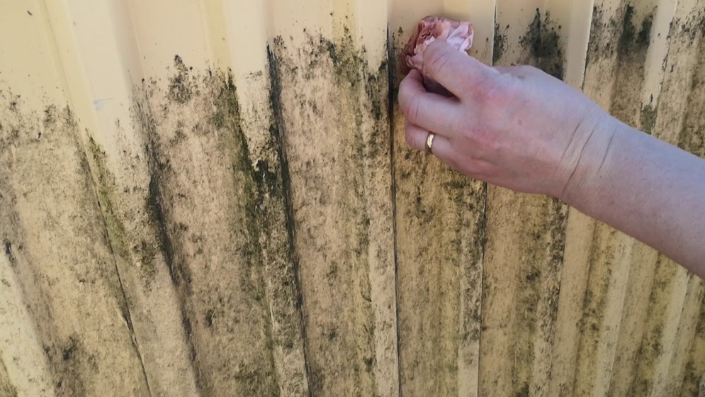 black mold cleaned with Bio-Eco® TT-18