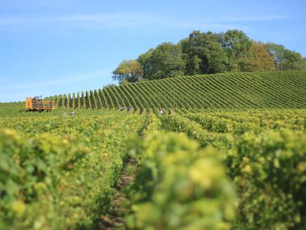 Economía Circular la apuesta del Sector Agroalimentario Chileno